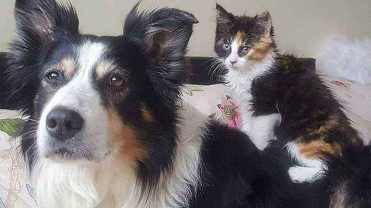 Cadela-adota-gatinha-idêntica-a-ela