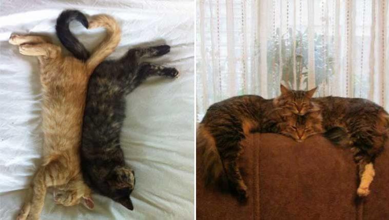 Donos-registraram-seus-gatinhos
