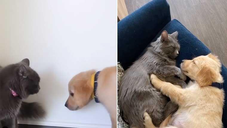 Gata apaixonada por vídeos de cachorro