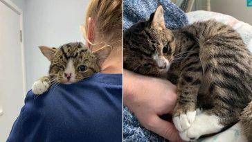 Gato com condição especial
