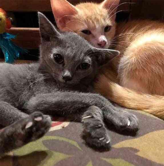 gato foi adotado