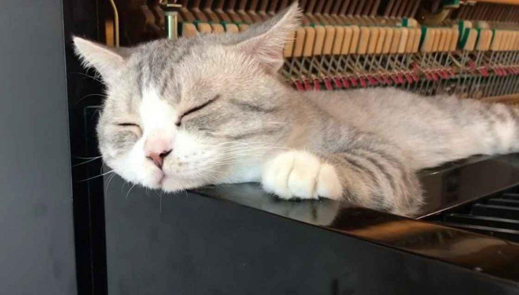 Gato é massageado