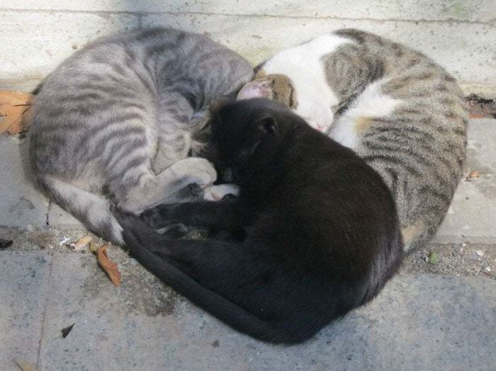 Gatos flagrados dormindo imagens
