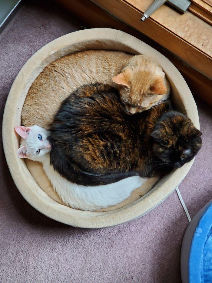 Gatos flagrados dormindo de forma engraçada