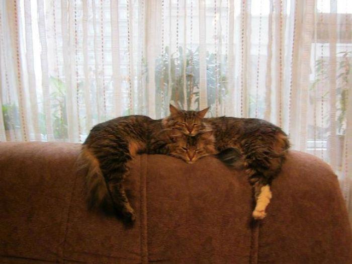 Donos registraram seus gatinhos fofos