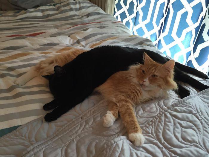 Gatos flagrados dormindo folgados