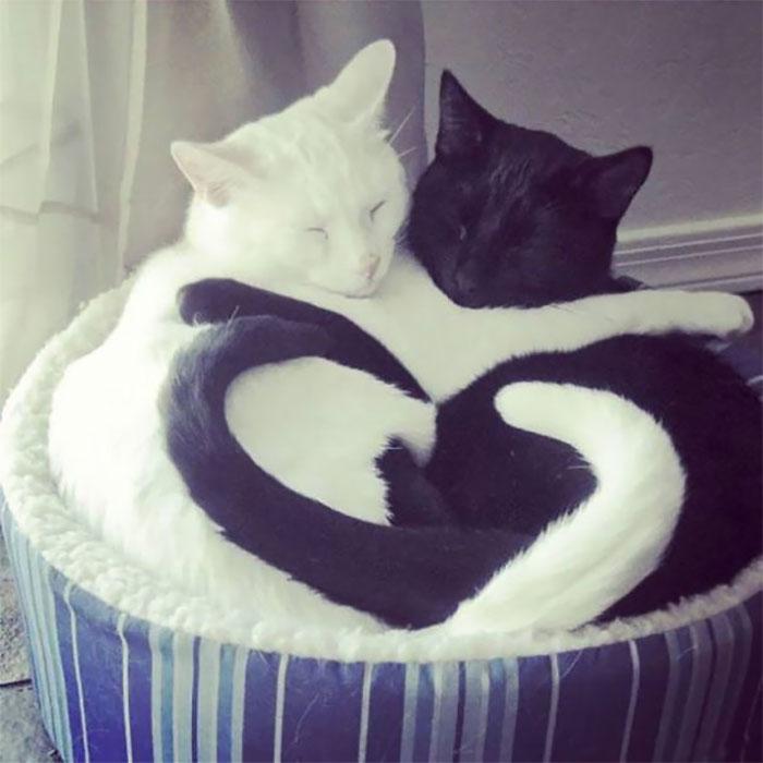 Gatos flagrados dormindo