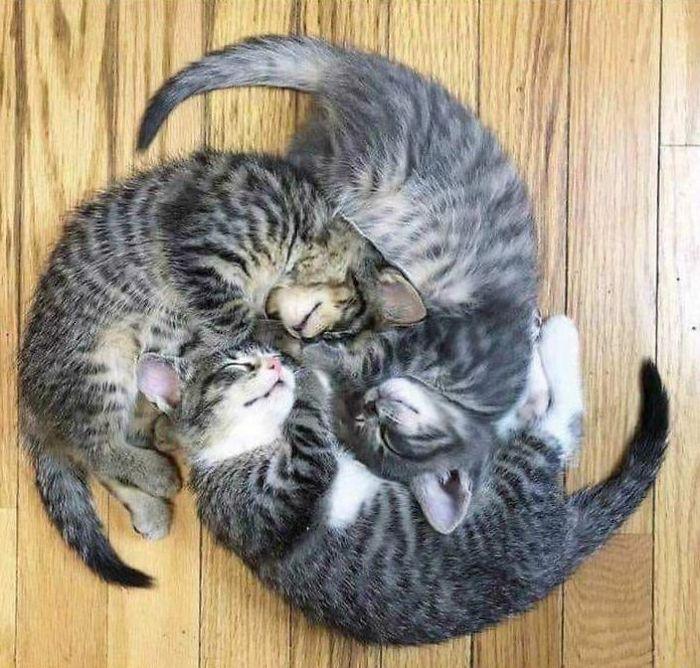 Gatos flagrados