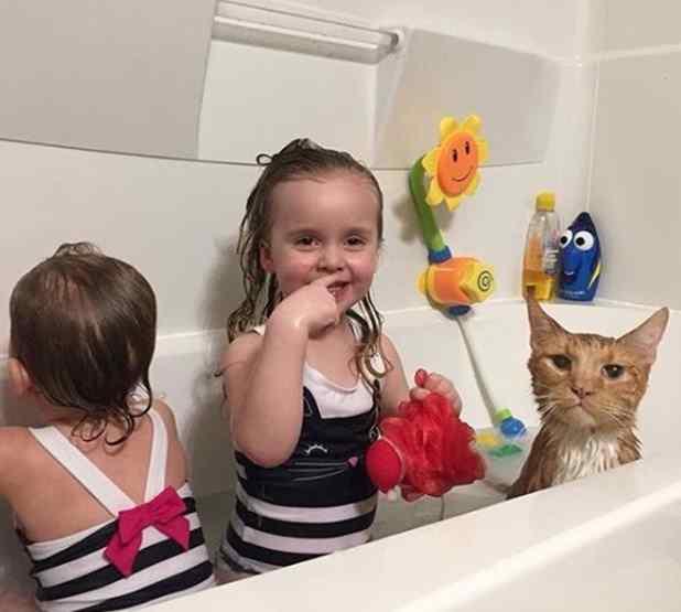 menina canta para gato