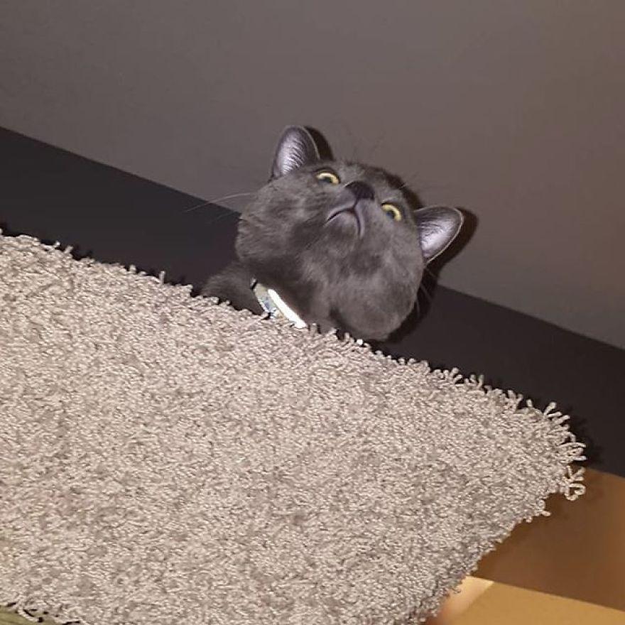 gatinho preto lindo