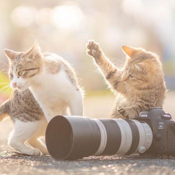 Fotógrafo registra lindas imagens de gatinhos com câmeras