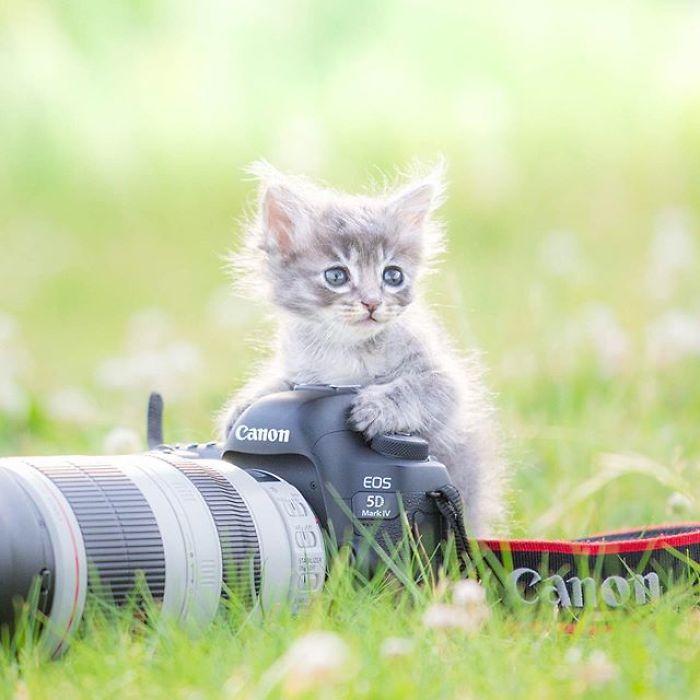 fotos de filhotes