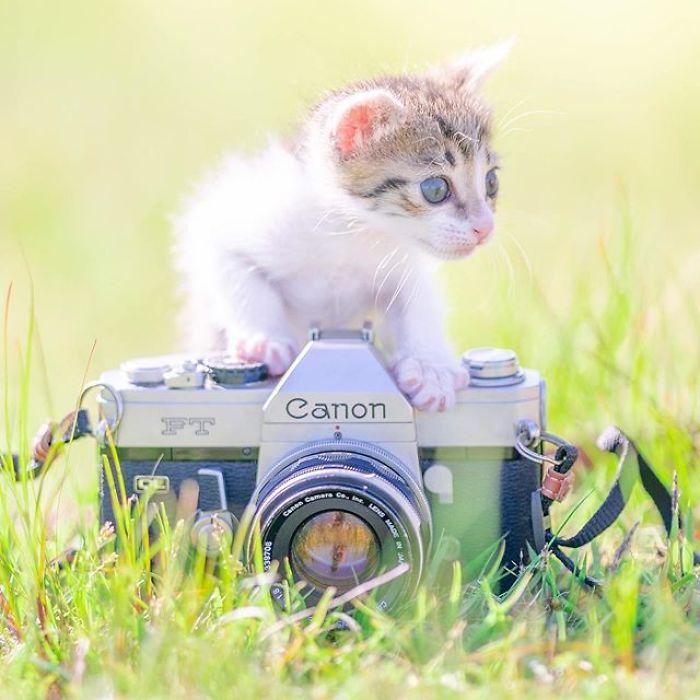 gatinhos brincam com câmeras Fotógrafo registra lindas
