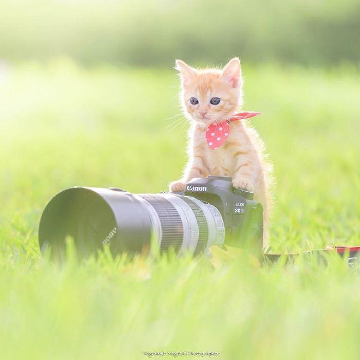 Fotógrafo registra lindas imagens de