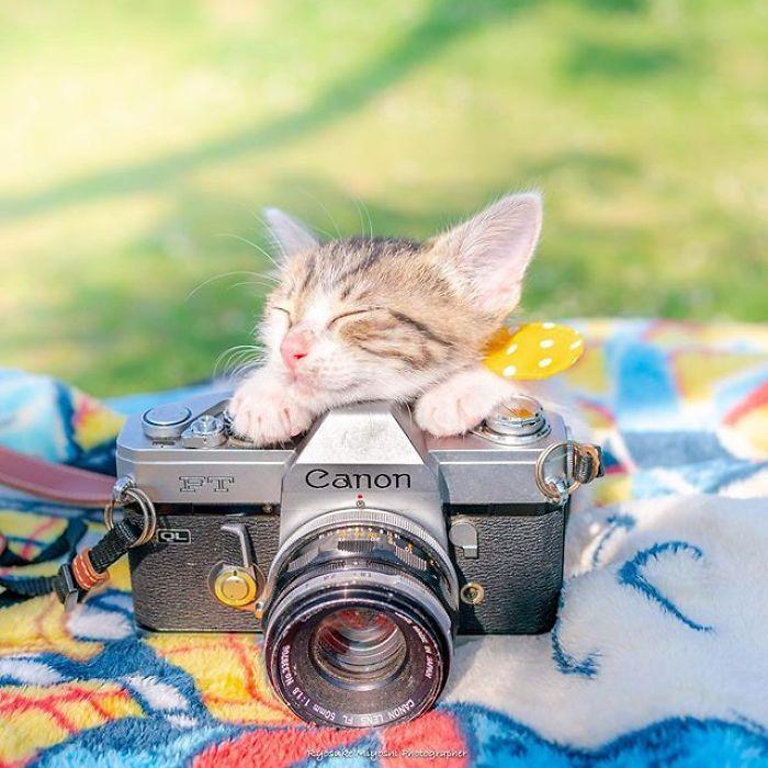 fotos fofas gatos