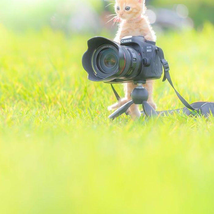 gatinhos e câmeras Fotógrafo registra lindas