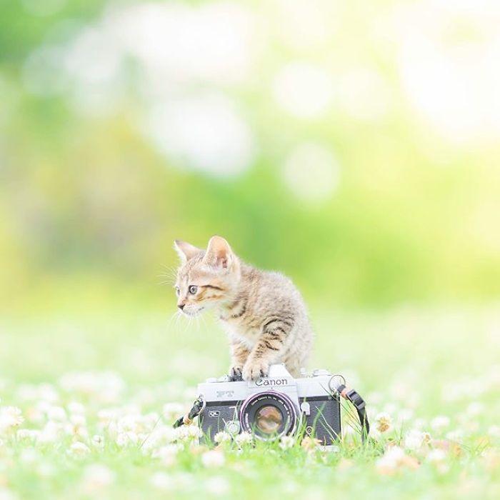 fotos de gatinhos lindos