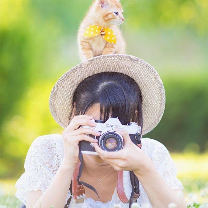 fotos lindas de gatinhos Fotógrafo registra lindas