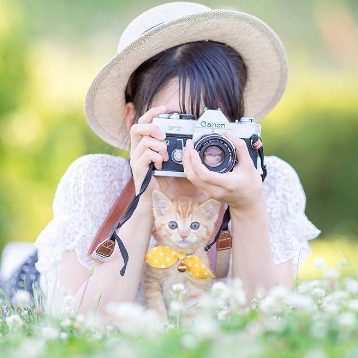 Fotógrafo registra lindas imagens de gatinhos fofos