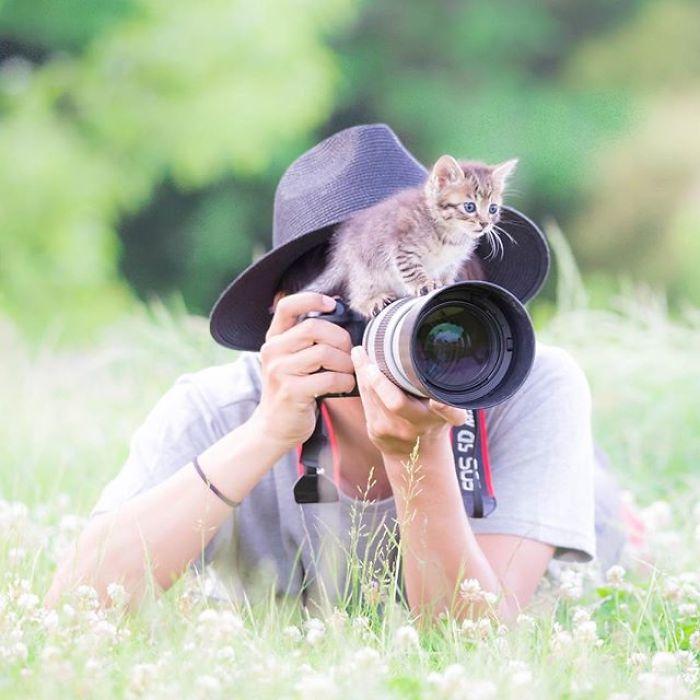 fotos de gatos fofos