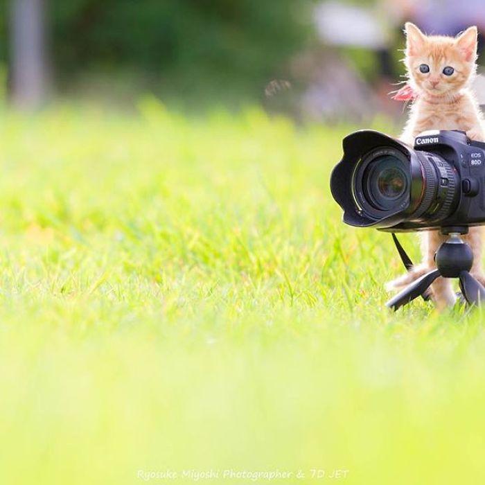fotos de gatinhos