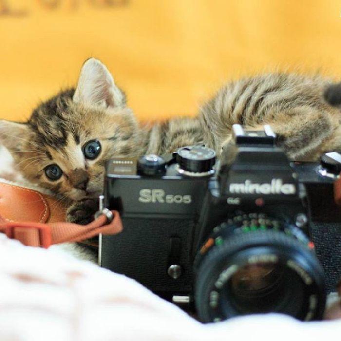 Fotógrafo registra lindas imagens de gatinhos