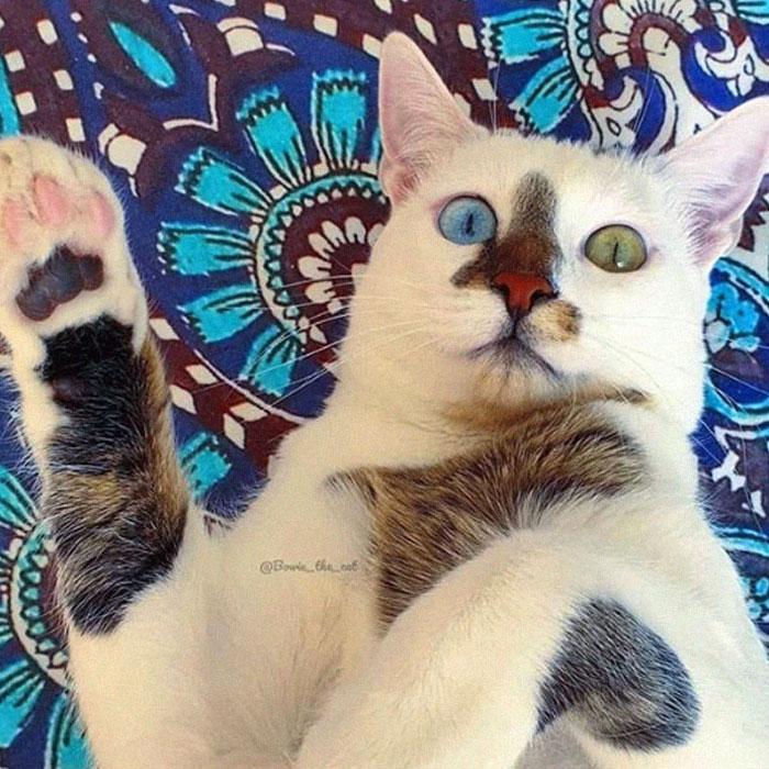 gato de rua que foi adotado viralizou