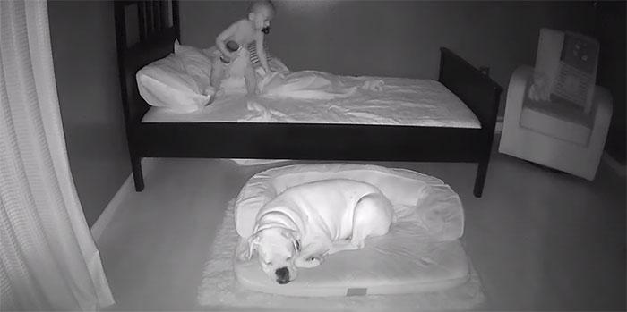 garotinho foge da cama para dormir com cachorro