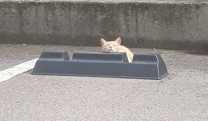 Gatinhos estão usando
