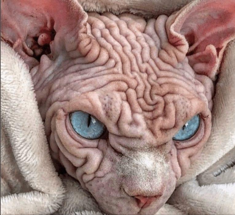 gato mais assustador do mundo