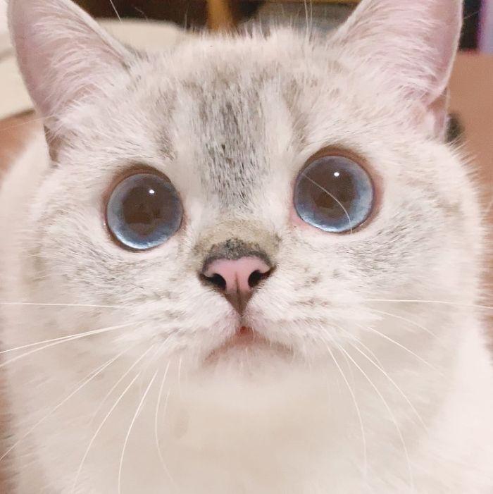 Gatinha com rosto super expressivo fotos