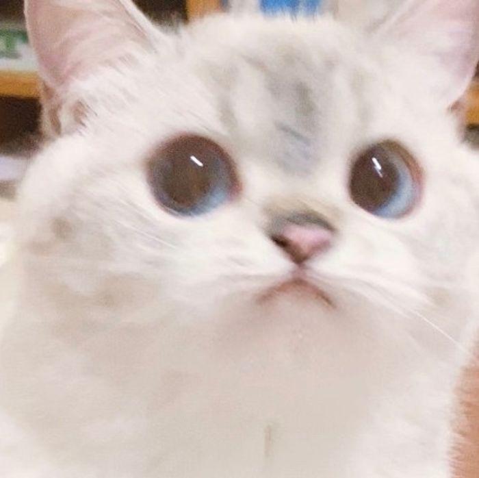 gato que parece um pokémon