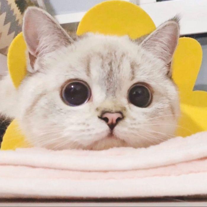 Gatinha com rosto super expressivo encanta