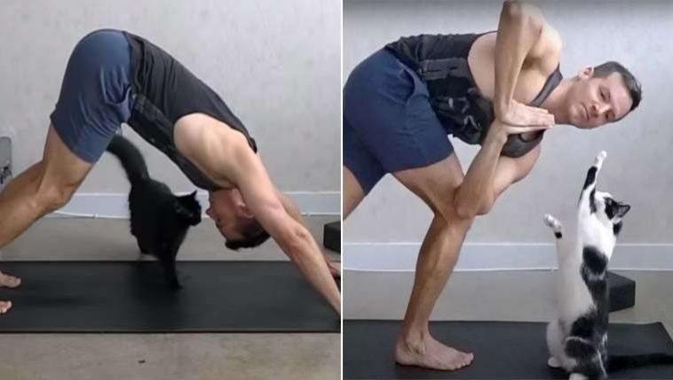 gatos participam de aulas de yoga