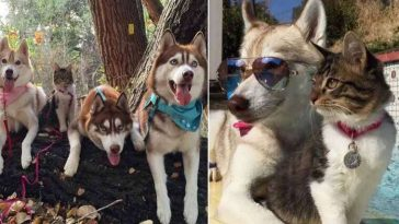 gata criada por huskies