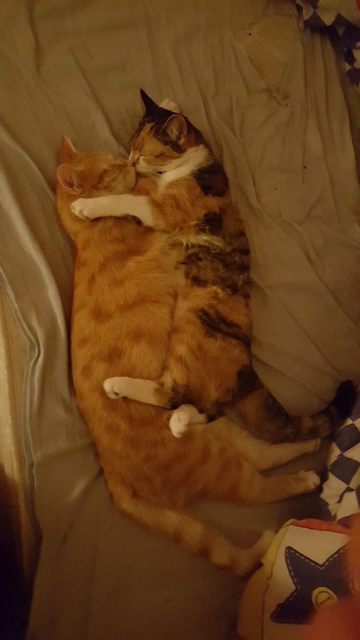 gatinhos bebês