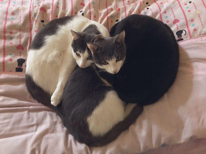 Gatos flagrados dormindo em qualquer lugar