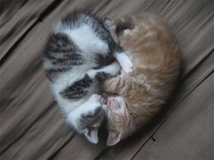 Gatos flagrados dormindo fofura