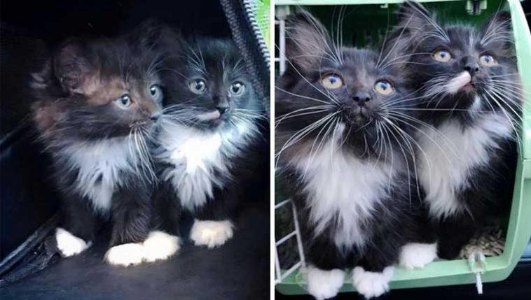 gatinhos-gêmeos-inseparáveis