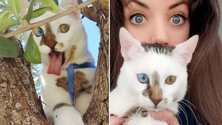 gato-de-rua-que-foi-adotado-e-viralizou