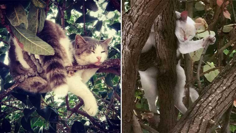 gatos-amam-árvores