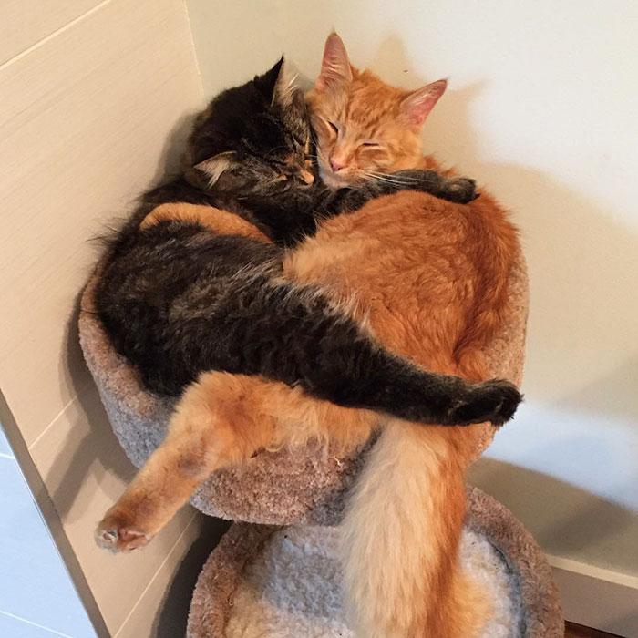 gatos dormem em qualquer lugar