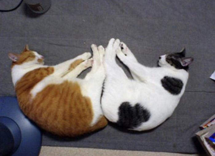 gatos dormem