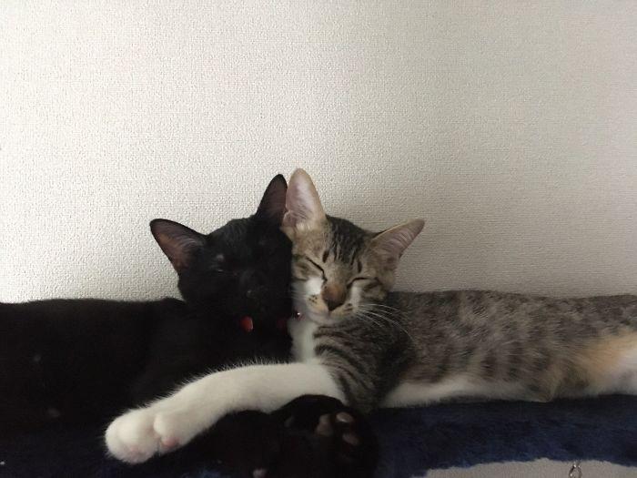 gatos pegam no sono engraçado