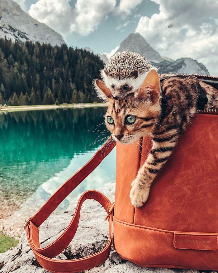 fotos de gato bengal instagram