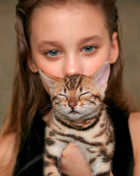 filhotes fotos de gato bengal