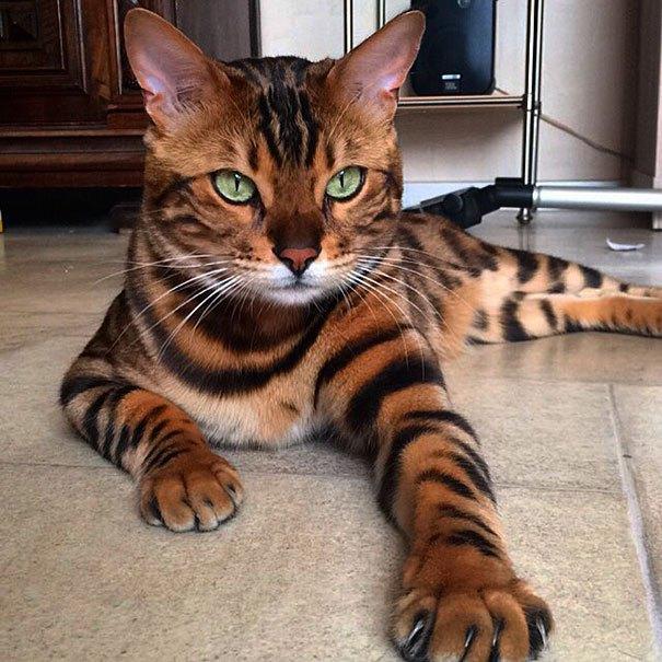 Fotos lindas de gatos