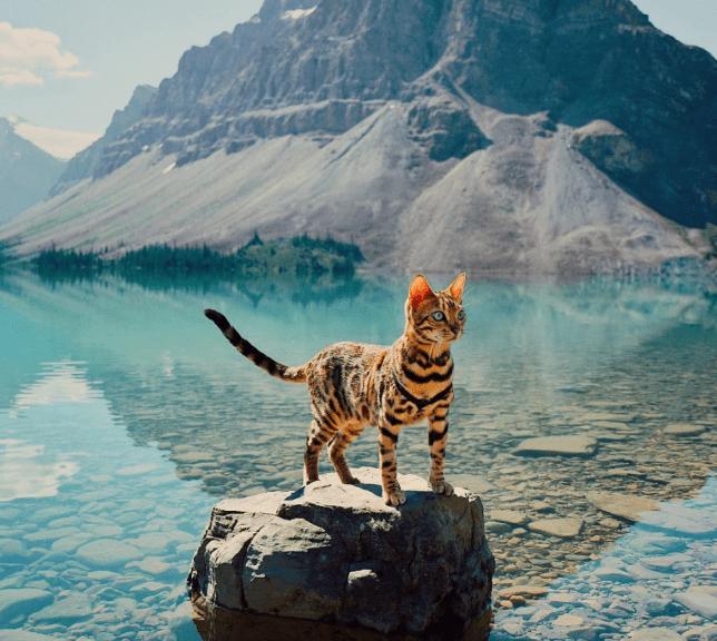 gatinhos mais lindos do mundo