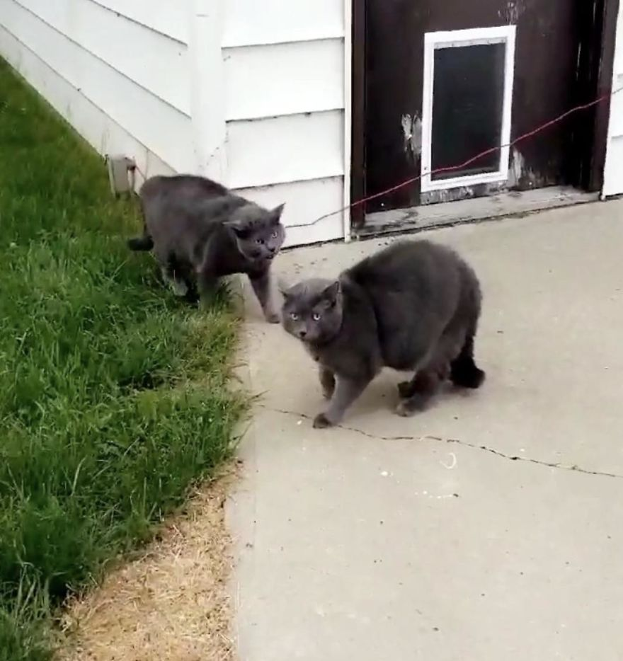 gato encontra clone no quintal