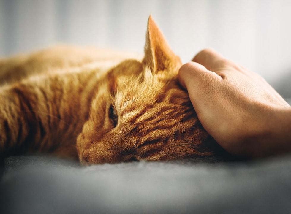 gatos podem prever a morte